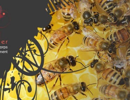 La ruche de l'Atelier Corps et Mouvement